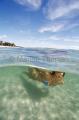 Diver in tropical island beach shallows.