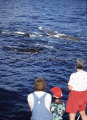 Sperm Whales (Physeter macrocephalus)
