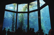 Aquarium viewing area with tourists.