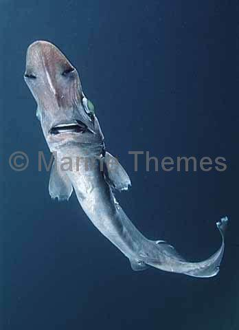 brier shark marinethemes stock photo library