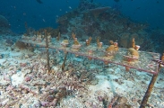 Coral growth field research.